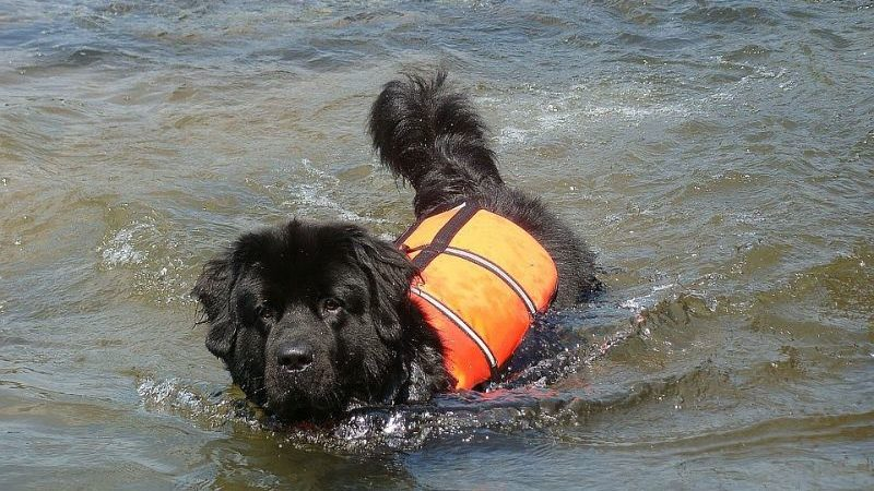 川で遊ぶ犬