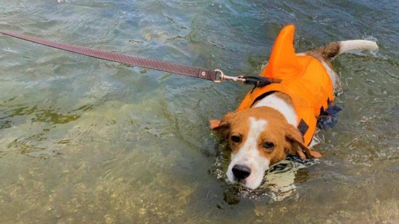 犬の川遊び