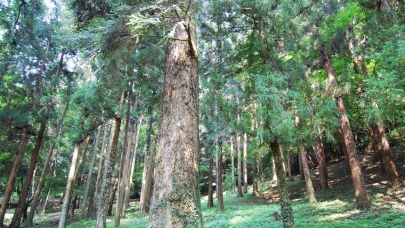船橋県民の森