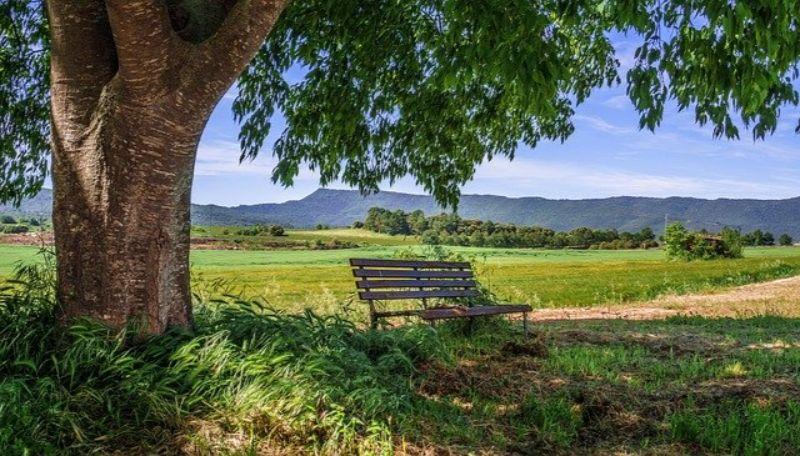 ベンチと草原