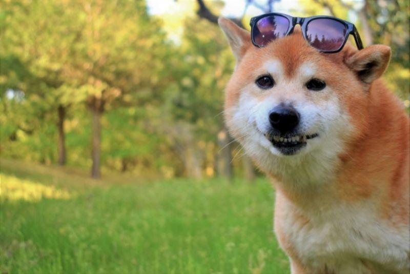 サングラスをかけた犬