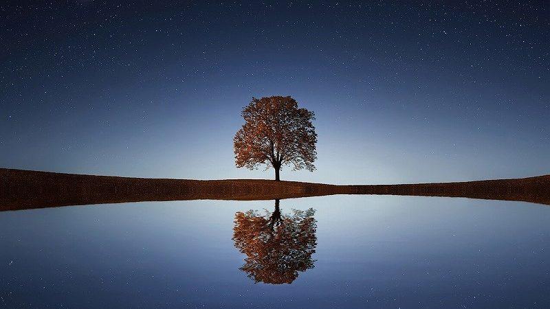 夜の湖にある1本の木