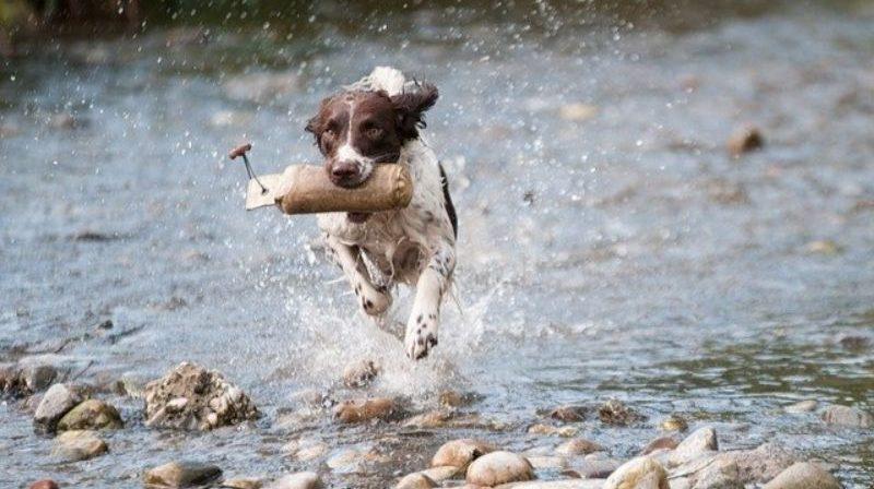 川の中で走る犬
