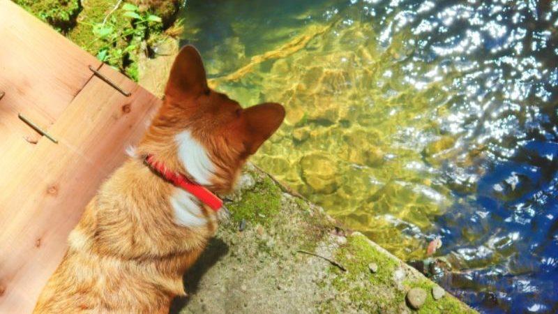 川をのぞく犬