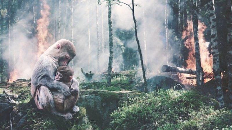 森林の減少