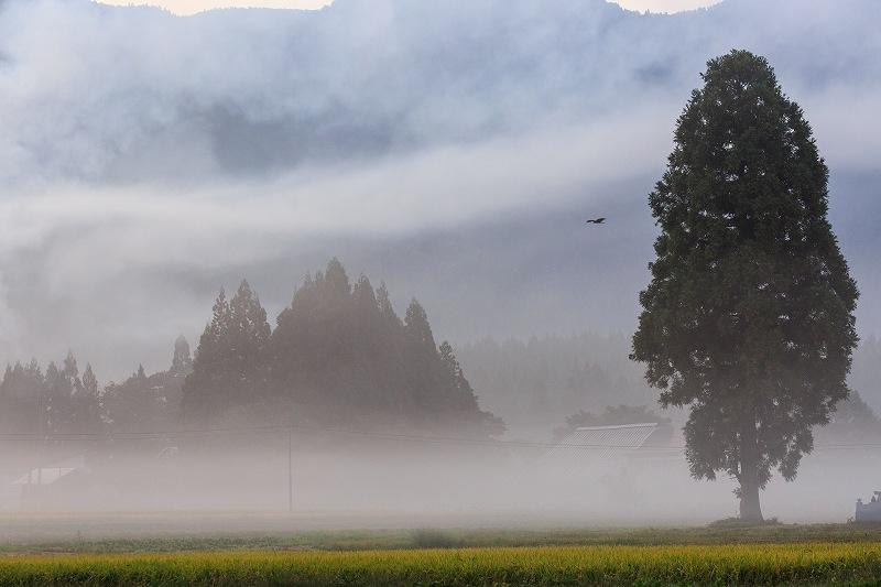 霧の深い景色