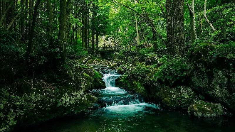 森の中の川