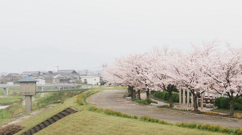 桜の咲く河川敷