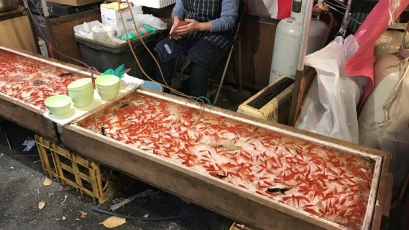 金魚すくい